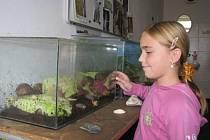 V přírodovědné učebně se žáci Základní školy Přeštice starají o nejrůznější živočichy. Mají tu například obrovské plže nebo želvu nádhernou