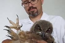 Tomáš Tykal pracuje ve fakultní nemocnici, kde vyrábí lidské protézy. Při polední pauze vymyslel a vytvořil ptačí ortézu
