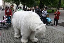 Lední medvěd pomáhal ve Smetanových sadech v Plzni sbírat podpisy pro svou záchranu