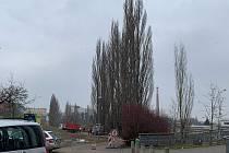 Topoly u Radbuzy jdou k zemi, hrozil jejich pád