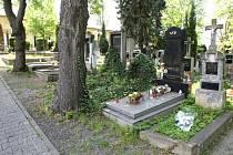 Mnohaleté stromy na Ústředním hřbitově v Plzni se budou postupně kácet, mají je nahradit nové