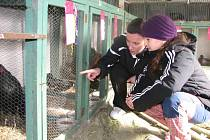 Na chovateslké výstavě v Kralovicích bylo o víkendu k vidění více než tisíc zvířat. Pro návštěvníky byla v nových prostorech připravena i tombola