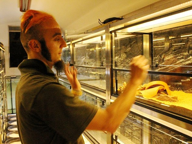 Mezi obojživelníky. Aleš Zíka v plzeňské zoo ukazuje terária, kde jsou ve světě kriticky ohrožené druhy žab a čolků
