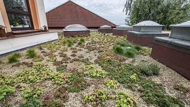 Víc zeleně na střechy, velí Brno. A opět nabízí peníze