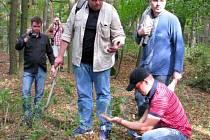 Průzkum lesa.