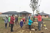 V Kožlanech vysázeli nové stromky.