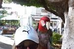 Návštěva starého města, Rhodos