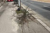 Vandalové poškodili stromy a zeleň