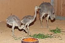 Nová mláďata v plzeňské zoo.