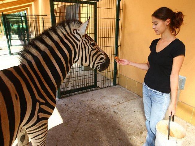 Během jednoho dne na místě ošetřovatele v plzeňské zoo jsem pochopila, že je to zejména fyzická dřina, která je alespoň z části vykoupena pohledem na nádherná zvířata