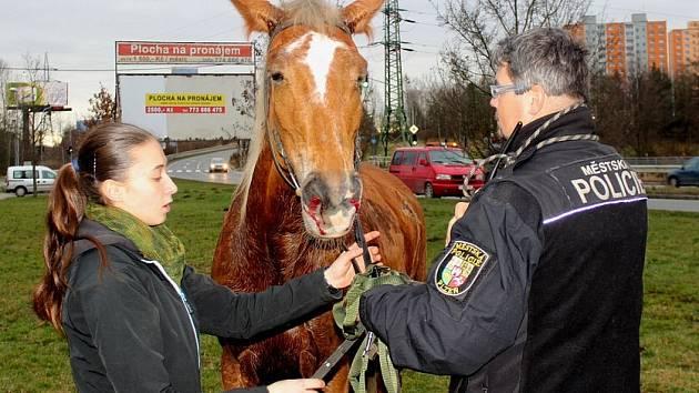 Vyděšený a zraněný kůň bez jezdce