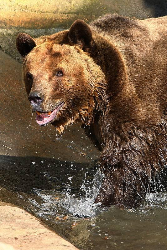 Dělejte hlasité zvuky, křičte, bouchejte hrnci, použijte houkačku, abyste medvěda vyplašili.