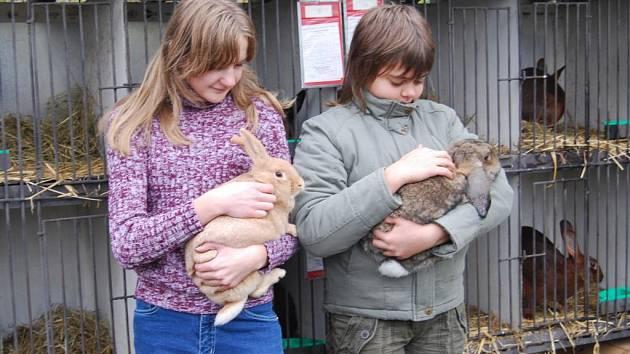 Mladé členky chovatelů z Přeštic Michaela Hůšová (na snímku vlevo) a Alena Vajaiová byly během výstavy odměněny cenami