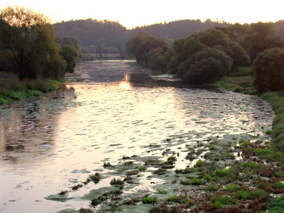 Vody bylo stále méně,  a tak Berounka pod Dolanským mostem postupně zarostla trávou.