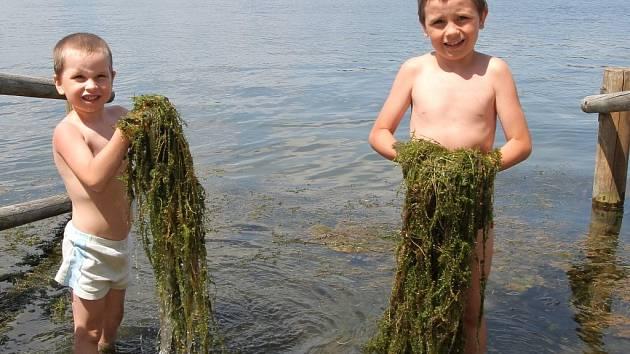 Vodní řasy je letos na Boleváku opravdu hodně, a to nejen přímo u břehu. Krajská hygiena už kvůli zdravotním rizikům označila vodu jako nevhodnou ke koupání