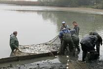 Bobra vytáhli rybáři v síti s rybami