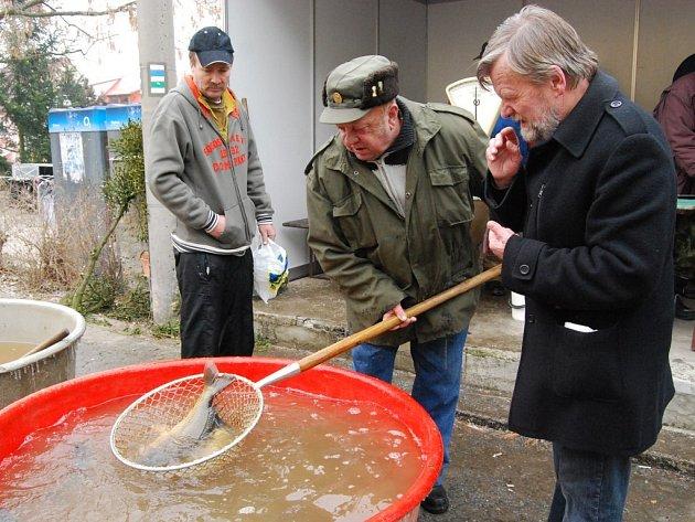 V Blovicích se kapr prodával za sedmdesát korun za kilogram živé váhy, což byla dle zjištění Deníku nejnižší cena na Plzeňsku. Na snímku Jan Poduška (napravo), předseda blovického svazu rybářů.
