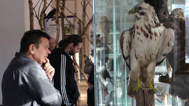 Vycpaniny živočichů, kteří žijí v rabštejnské přírodě, najdou návštěvníci v prvním patře muzea