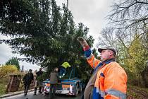 Příprava transportu vánočního stromu pro Plzeň.