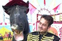 Cirkus Berousek nabízí jediného mluvícího koně na světě