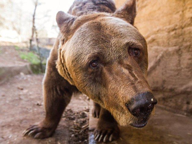 Pro čtveřici medvědů v plzeňské zoo skončila zima.