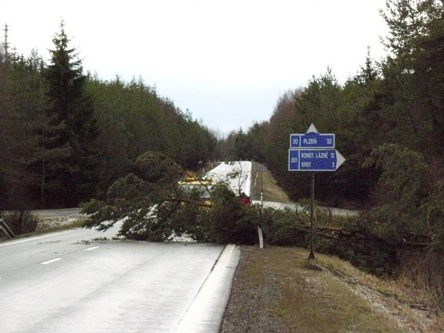 Padlý strom u obce Krsy