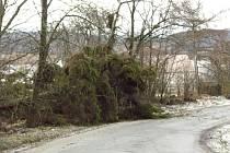 Padlý strom u Služetína