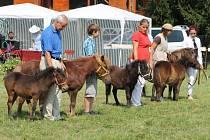 V Plasích se předvedla devadesátka poníků