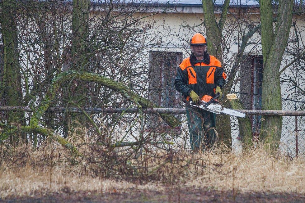 V Plzni na Borech odstartovalo kácení stromů kvůli chystané výstavbě tramvajové trati