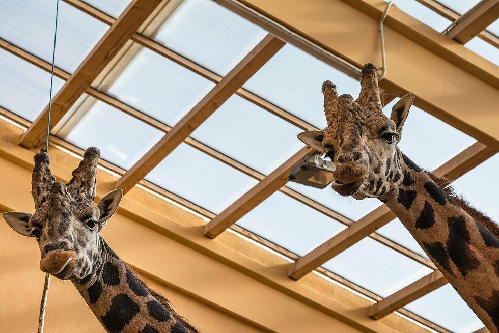 Otevřené pavilony v plzeňské zoo.