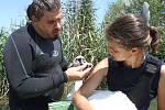 Kroužkování labutí na jižní Moravě členy plzeňského spolku ochrany ptactva