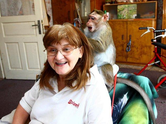 Opička Bára je Lence Korandové psychickou i fyzickou oporou. Naučila se dokonce podávat všechno, co paničce upadne, přinese i ovladač na televizi