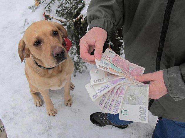 Psí útulek letos dostal z vánočního festivalu přes osm a půl tisíce korun