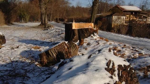Česká inspekce životního prostředí  pozastavila kácení památných stromů v aleji Kilometrovka.  Ta je oblíbenou výletní trasou mnoha Plzeňanů