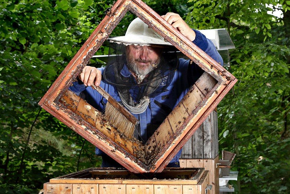 18 - Z medových plástů je potřeba včely opatrně oklepat či omést zpět do úlu, protože mladé ještě neumí létat.