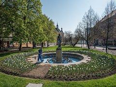 Plzeňský sadový okruh teplé dny proměnily – zazelenal se, rozkvetl… Brzy začne také tryskat voda z fontán, které na to třeba ještě nabarvit.