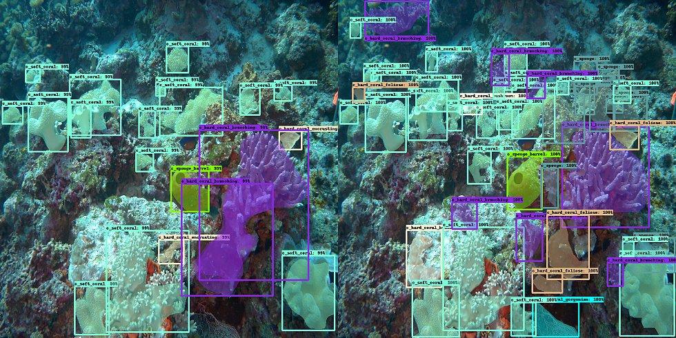 Rozpoznávání korálů.