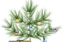 Pod vánočním stromkem byl malý svetr, diskografie Uriah Heep, hlavolam i kuchyně.
