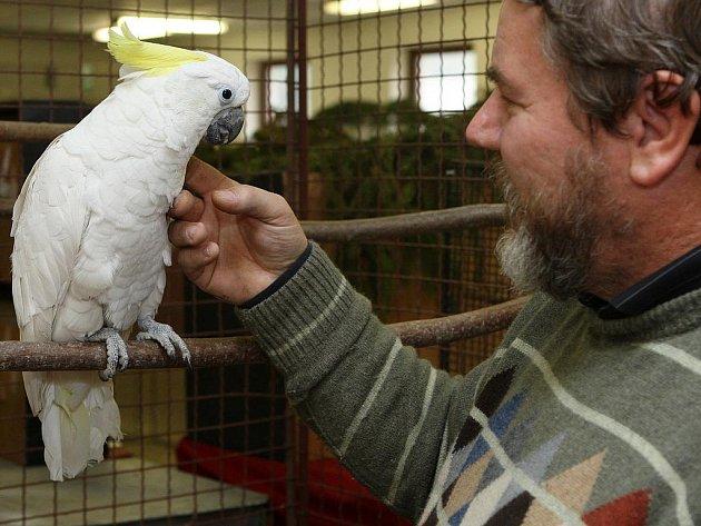 Jeden z organizátorů víkendové výstavy exotického ptactva Jan Kondrys s kakadu žlutočečelatým.