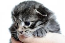 Jarmark pro opuštěné kočky.