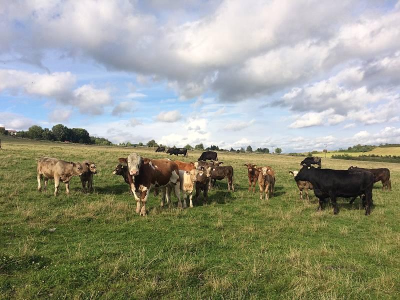 Na farmě Olšovka zkouší zemědělství bez orání. Naráží na úředního šimla.