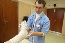 Plné ruce práce teď mají lékaři na úrazové ambulanci Fakultní nemocnice v Plzni. Na snímku sádruje zlomenou nohu jedné pacientky Ludvík Hofhans