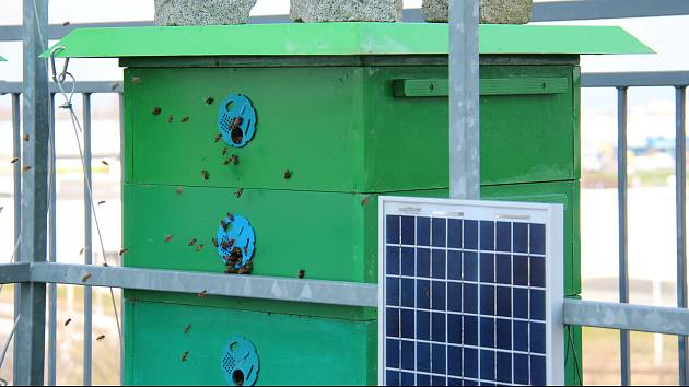 Fakulta strojní Západočeské univerzity v Plzni (ZČU) se zapojila do projektu společnosti Softech, jehož cílem je s využitím moderních technologií podrobně monitorovat život včel.