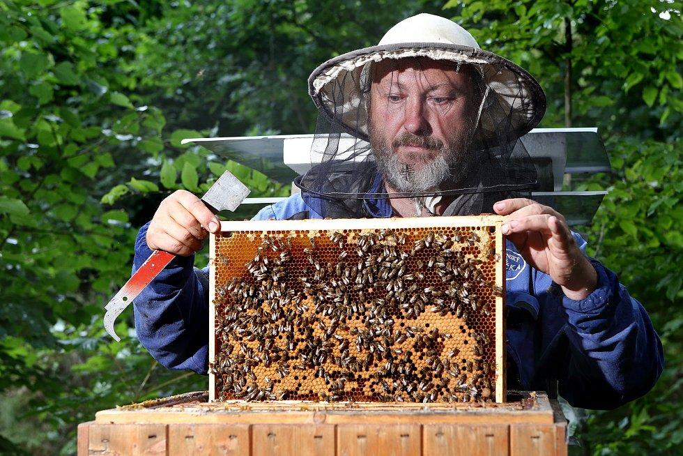 04 - Do části plástů klade matka vajíčka a z těch se vylíhnou nové včely. Tam kde je volno, včely uloží nektar z květů a pyl pro krmení larviček.