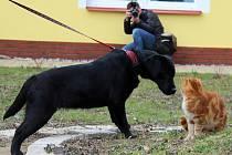 Černá labradorka má jméno Růženka.