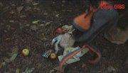 Babyka byl lapen nedaleko Zábělé