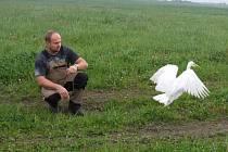 Volavka našla nový domov na Tachovsku