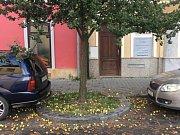 Spadané hrušky ve Švihovské ulici v Plzni.