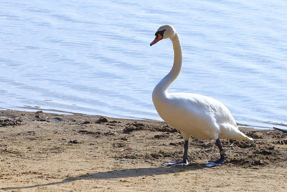 Teplé počasí vylákalo lidi v Plzni k Velkému boleveckému rybníku