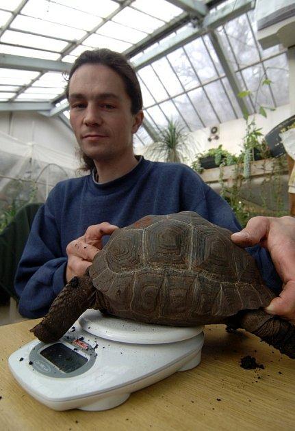 """""""Tak holky, šup na váhu,""""  mohl si včera říci ošetřovatel Zdeněk Bříza při pravidelném měření a vážení  želv obrovských. Ty chová plzeňská zoo již od roku 2004. Návštěvníci je brzy uvidí v nové expozici, která vzniká v blízkosti  hlavní pokladny."""